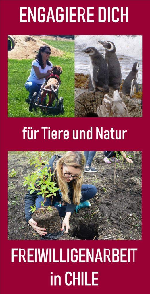 Anzeige Tierprojekte